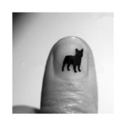 fransk-bulldog-negle-1_00017