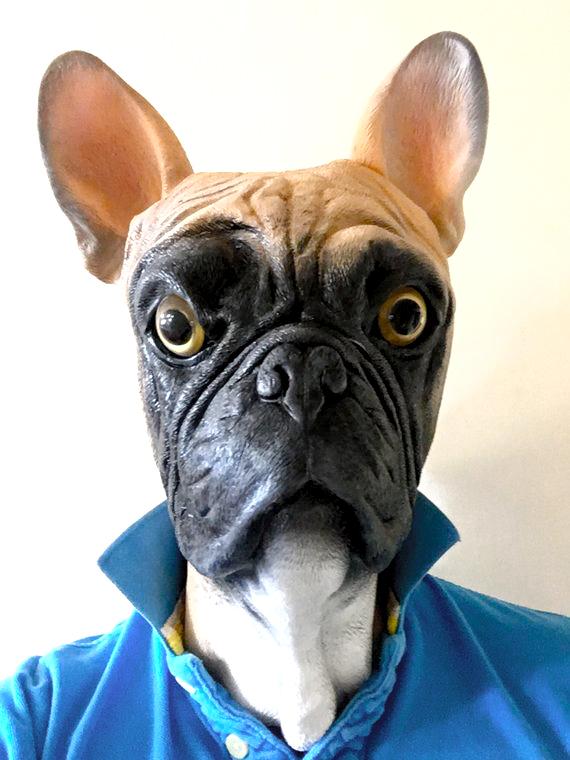 Fransk Bulldog fawn maske