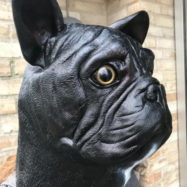 Fransk Bulldog brindle maske